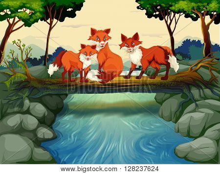Three foxes on the log over the river illustration