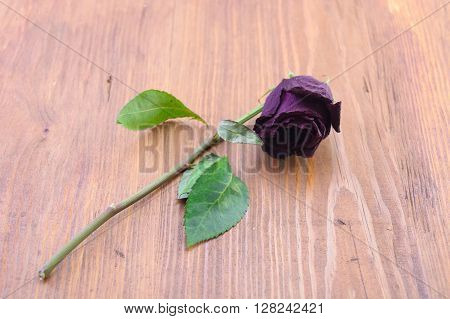 the macro dried-up claret rose on a wooden background