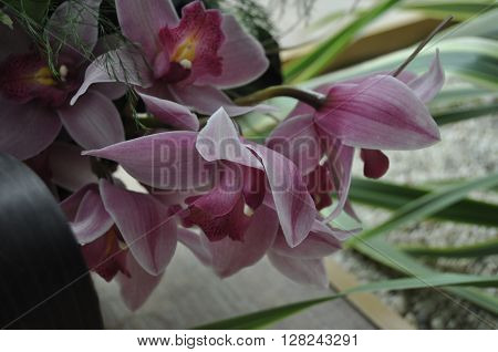 Streaked orchid flowers. Beautiful orchid flowers. - symbol of aesthetics and creativity