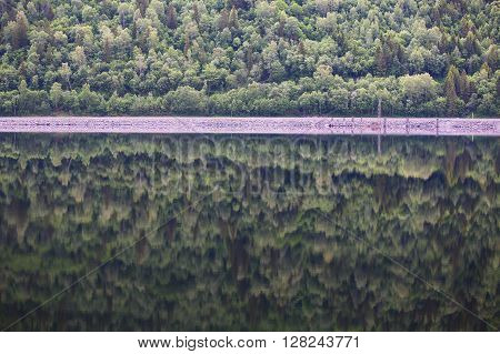 Mountain Forest With Reflection