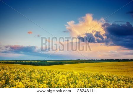Magnificent views of the endless canola field glowing by sunlight. Dramatic picture and picturesque scene. Location place Ukraine, Europe. Artistic picture. Beauty world. Soft filter effect.
