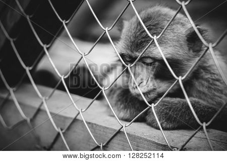 Lonely monkey sitting in the cage at the zoo
