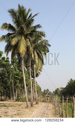 BOSONTI, INDIA - FEBRUARY 13: Bengali village February 13, 2014 in Bosonti, West Bengal, India.