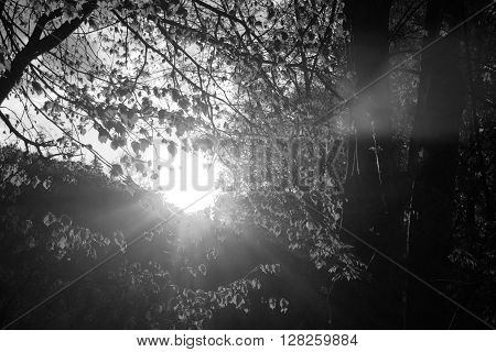 Black and white landscape with sunset in a forest