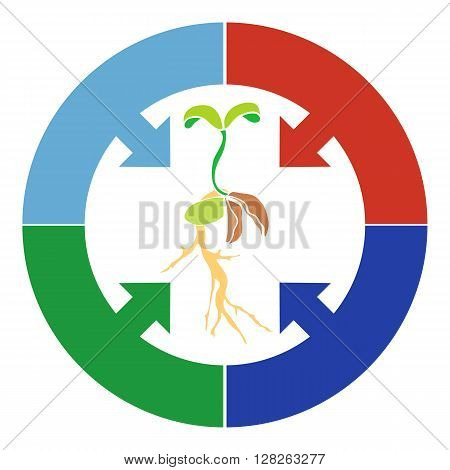 Elements Infographic plant growth stage germination of grain beans seeds. Rostock with a small spine and cotyledons and a circle arrow.