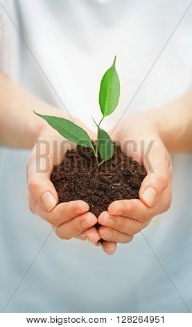 Female hands holding soil and plant, closeup