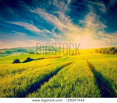 Vintage retro effect filtered hipster style image of rolling summer landscape with green grass field on sunset