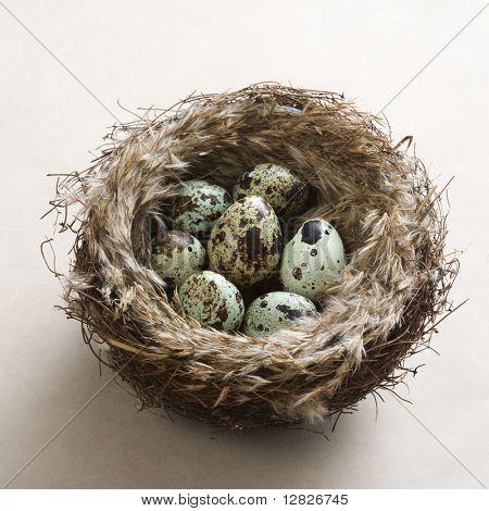 Studio still life of speckled eggs in nest.