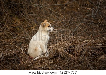 Brave stray puppy sitting in sinister place and waiting for the mom's return