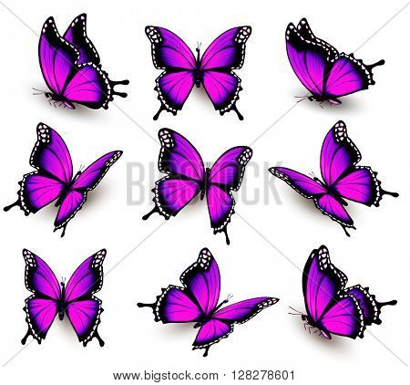 Beautiful of pink butterfly in different positions. Vector.