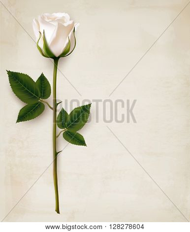 Happy Mother's Day background. Single white rose on an old paper background. Vector.