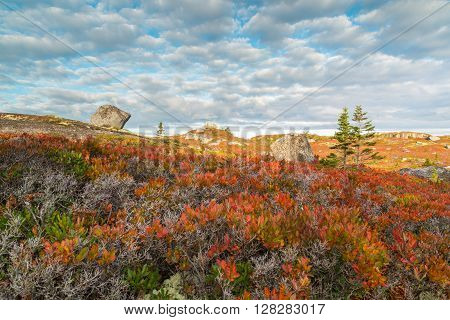 A boulder strewn field is carpeted by red leaves of berry bushes in Autumn near Halifax, Nova Scotia.