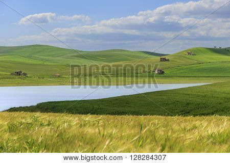 RURAL LANDSCAPE SPRING.Between Apulia and Basilicata: Lake Basentello.Poggiorsini (ITALY).Hilly landscape: lake surrounded by cornfields.
