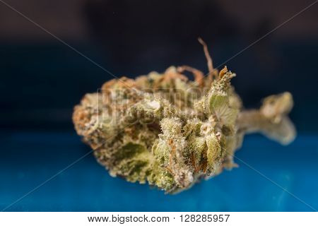 Recreational Marijuana nug shot in Denver Co