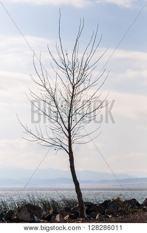 A lonely tree surrounded by Utah Lake