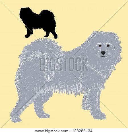 Siberian Samoyed dog black silhouette picture vector illustration