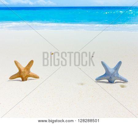 Sand Sea Stars