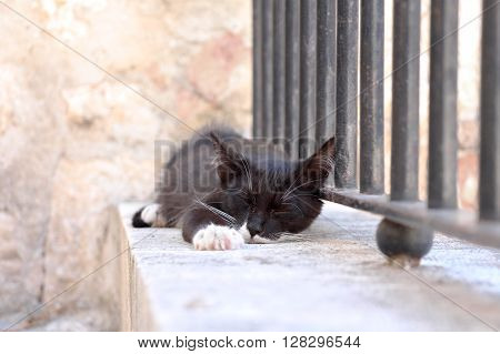 Homeless black cat with white paws and whiskers sleeping outdoors