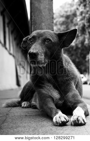 A stray dog on footpath.Take in blackwhite shot.
