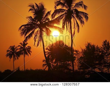 Palms and sun tropical sunset in Goa India