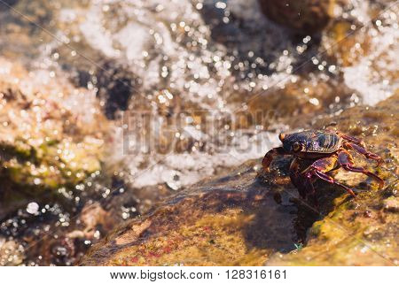 Wet sea crab on the stone on a sunny summer day.