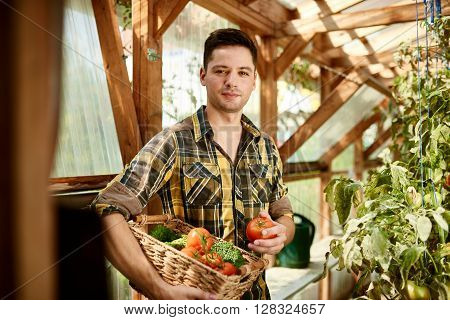 Male gardener tending to organic crops and picking up a bountiful basket full of fresh produce