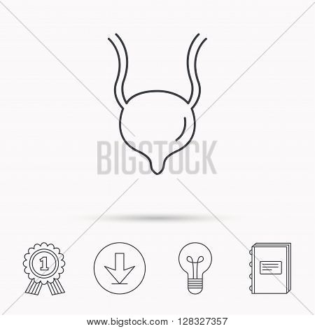 Urinary bladder icon. Human body organ sign. Urology health symbol. Download arrow, lamp, learn book and award medal icons.