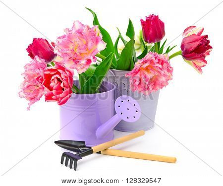 Collection tulips and decoration tools isolated on white