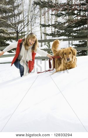 Attractive smiling mid adult Caucasian blond woman being pulled through the snow by a Golden Retriever.