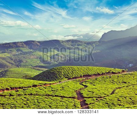 Vintage retro effect filtered hipster style image of green tea plantations on surise. Munnar, Kerala, India