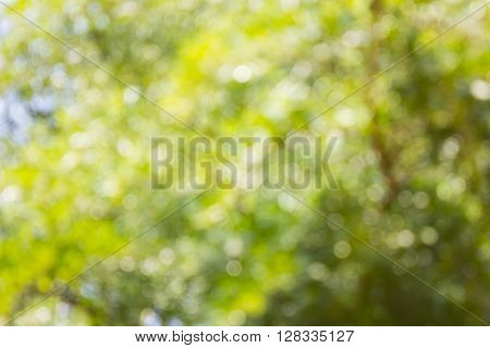 Spark And Blow Bokeh Of Tree  For Romantic Soft Abstract Light Nature Background