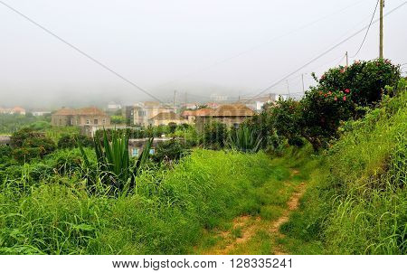 Dirty Road Covered By Vegetation