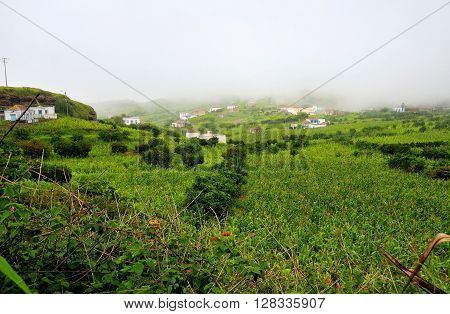 Cornfield  And Homes Under Heavy Clouds