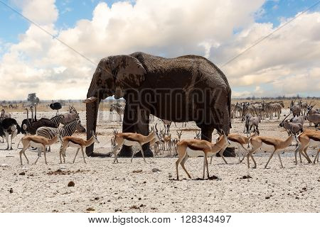 Full Waterhole With Elephants