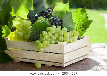 Vine and bunch of white grapes in wooden box on garden table