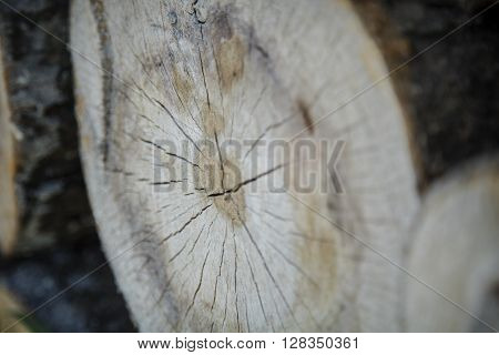 Tree Cross-Section with Thick Bark in a pile ** Note: Shallow depth of field
