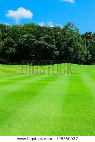 Fairway Green Grass
