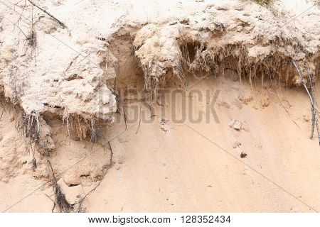 Closeup of sand landslide with roots of various plants