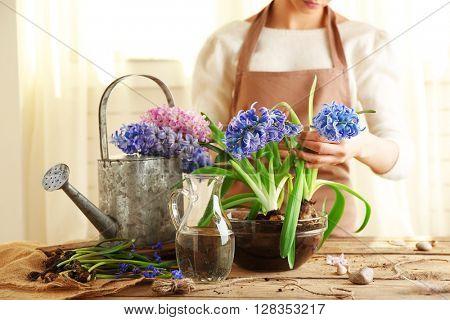 Woman planting hyacinths indoors