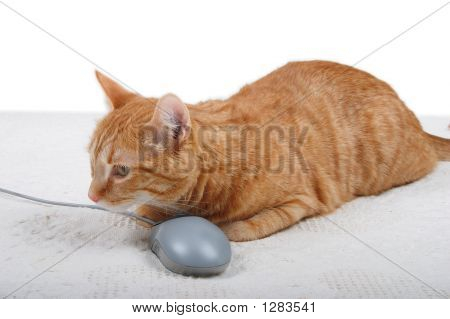 Cat With A Pc Mouse