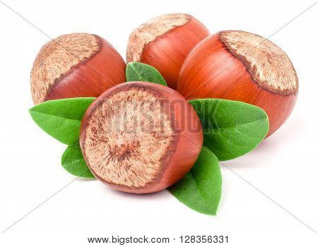 Four hazelnuts with leaves isolated on white background close-up macro.
