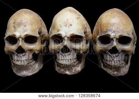Awesome, Group Of Skull, On Black Background, Still Life Style