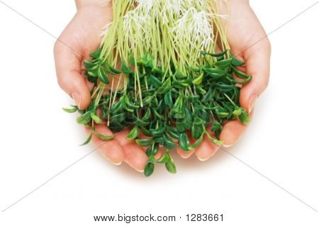 Two Hands Holding Herbs Isolated On White