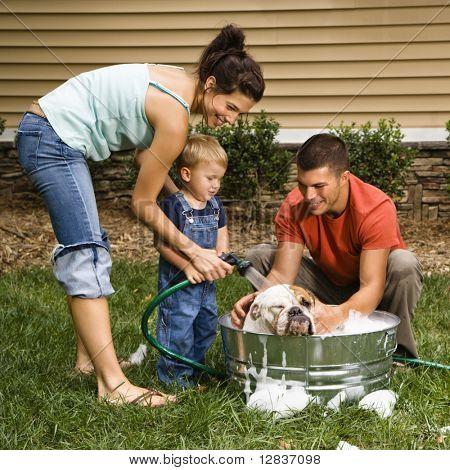 Familia Caucásica con hijo pequeño Bulldog Inglés de lavado en patio trasero.