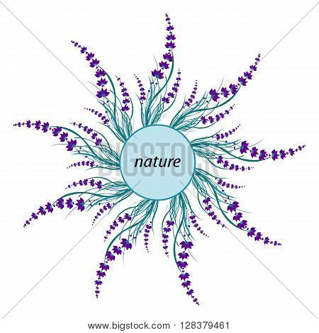 Lavender sprigs nature circle. Lavender frame. Vector illustration.