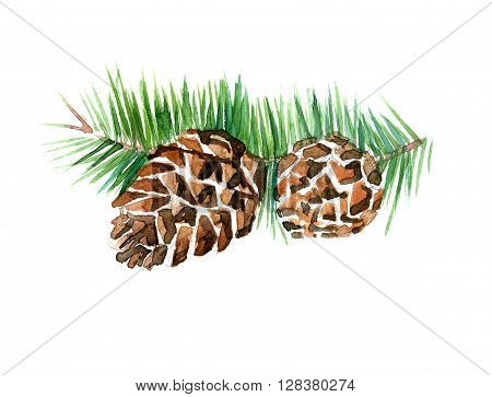 Watercolor summer insulated pine cone on white background
