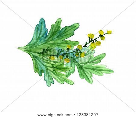 Watercolor summer insulated wormwood on white background