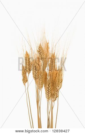 Several sprigs of dried wheat.
