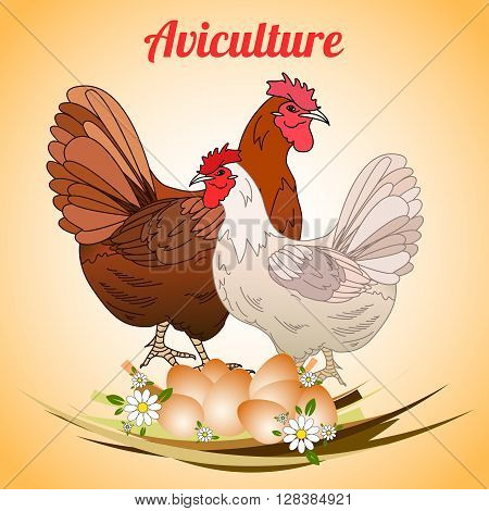 Hen with eggs. Poultry. Aviculture. Vector illustration.
