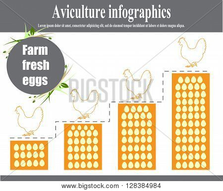 Aviculture and poultry infographics. Poultry. Vector illustration.
